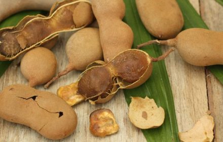 Tamarind pulp is widely used in Mexican cuisine, especially in sweets and beverages. (Mexican government)