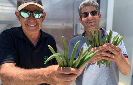 Shlomo Kadosh, Vanilla Vida chief operating officer (left), and Raz Krizevski, vice president, research and development, show off their product. Their company has developed proprietary greenhouse methods to control how and when the valued orchid blooms. (Vanilla Vida/Bar Cohen)